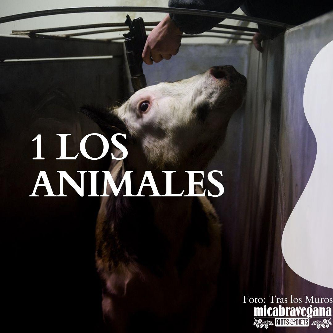 hazte vegana por los animales. no son comida