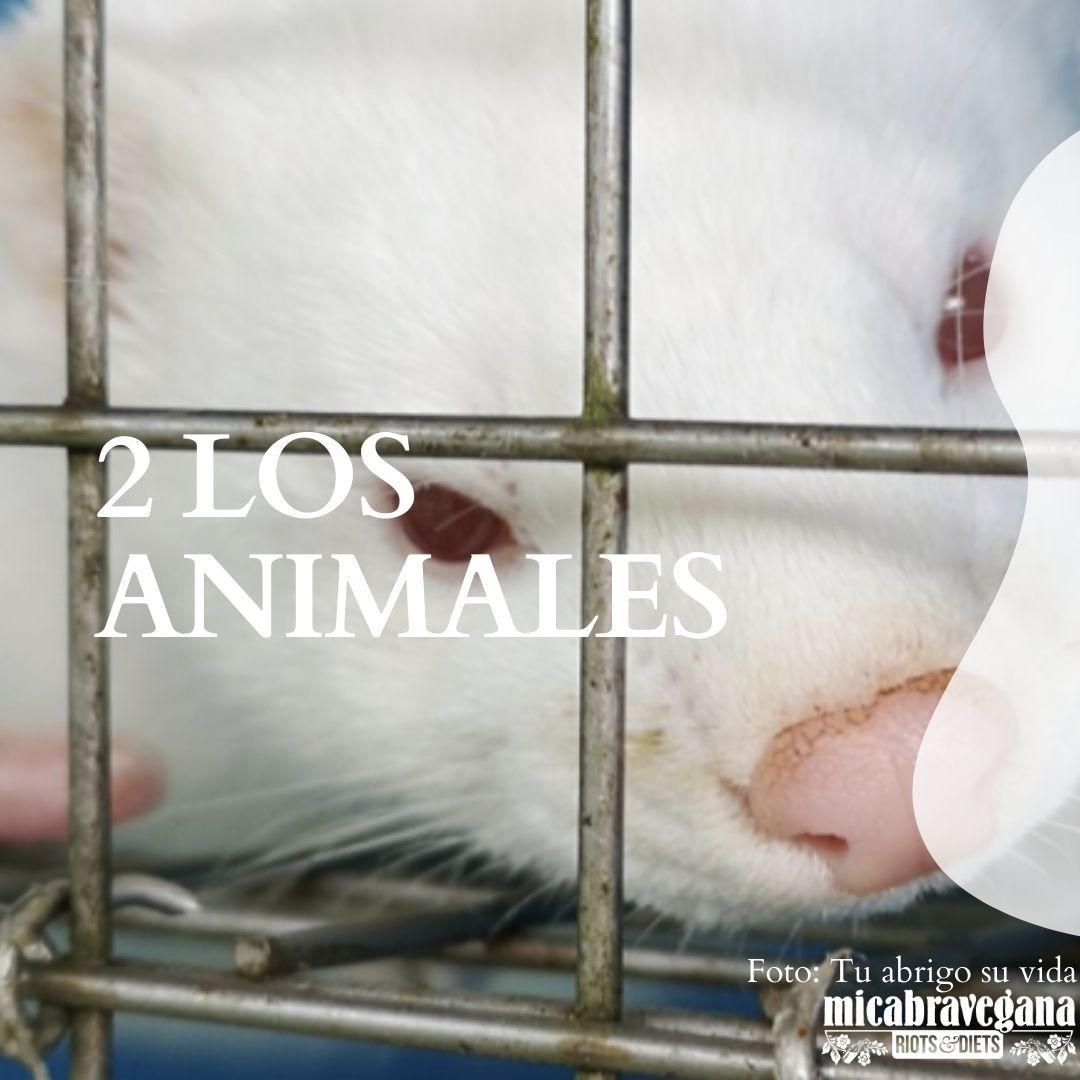 los animales no son vestimenta