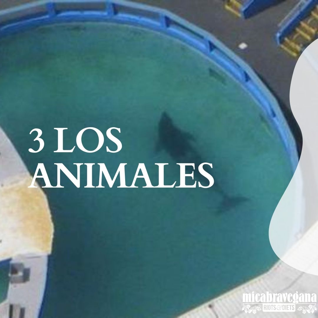 los animales no son diversión
