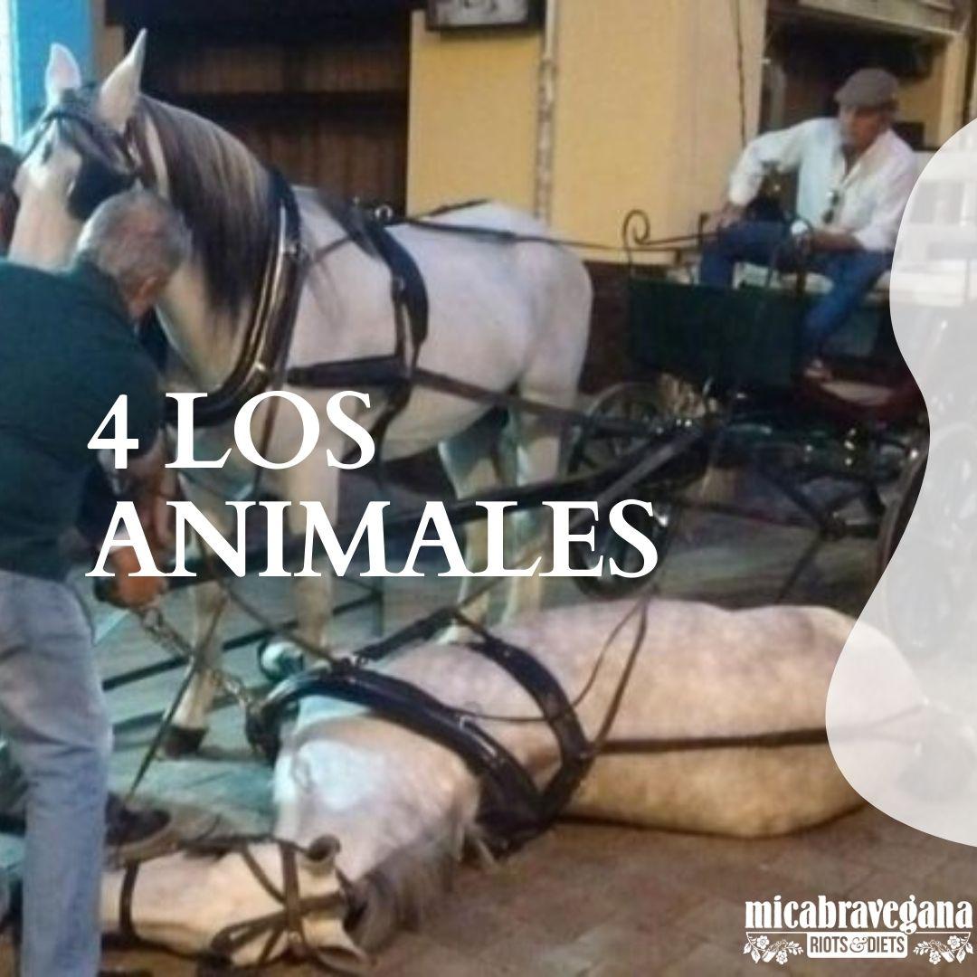 los animales no son transporte