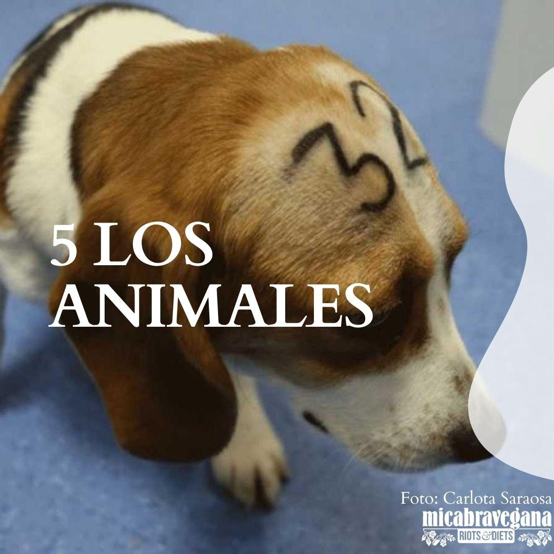 los animales no son experimentos